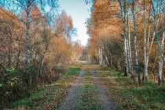 横跨Kalvebod Fællen公园的道路 库存图片