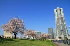横滨地标塔和樱花 免版税库存图片
