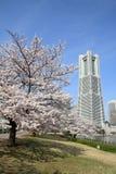 横滨地标塔和樱花 库存图片