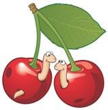 樱桃二只蠕虫 库存例证