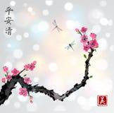 樱桃佐仓在开花和两只蜻蜓的树枝在白色发光的背景 传统东方墨水绘画 免版税库存图片