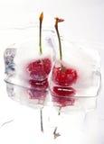 樱桃冻结的白色 免版税图库摄影