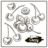 樱桃图画集合 在白色背景的被隔绝的手拉的莓果 库存例证