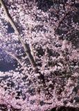 樱桃在晚上 库存照片