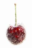 樱桃在用泡影盖的水中 免版税图库摄影