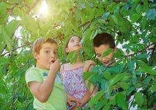 樱桃堆儿童吃 免版税库存图片
