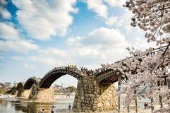 樱桃开花和Kintai桥梁,岩国市,山口,日本 库存图片