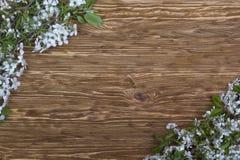 樱桃开花的分支在木板的 图库摄影