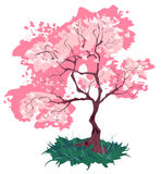 樱桃开花老 库存图片
