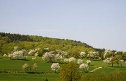 樱桃德国下部萨克森地区春天结构树 图库摄影