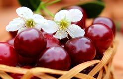 樱桃成熟水多与花在篮子在 库存照片