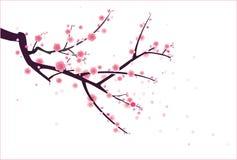 樱桃或李子开花模式 库存例证