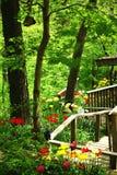 樱桃接近的花园红色春天郁金香上升白色 免版税库存图片