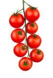 樱桃接近的蕃茄 宏指令 图库摄影