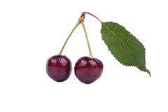 樱桃收集果子蔬菜叶 库存照片