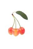 樱桃收集果子蔬菜叶 图库摄影