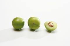 樱桃李子(李属cerasifera) 免版税库存照片