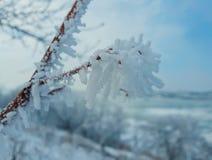 樱桃树冰 免版税库存图片
