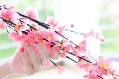 樱桃树分支在有招标的一只妇女手上 免版税库存照片