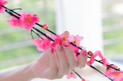 樱桃树分支在有招标的一只妇女手上 免版税库存图片