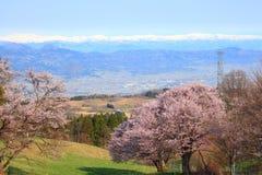 樱桃树和多雪的山 免版税库存图片