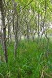 樱桃树和草丛 免版税库存图片