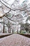 樱桃树在大宫在春天停放,埼玉,日本 使用sakurafubuki和樱花瓣在地面上 图库摄影