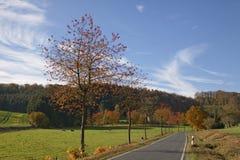 樱桃树在秋天,乡下公路在Holperdorp,特克伦堡国家, NRW,德国 免版税库存照片