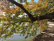 樱桃树在秋天 免版税库存照片