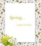 樱桃树在空白附近开花框架用苹果 库存图片