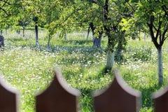 樱桃树在绿色春天 库存照片