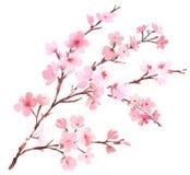 樱桃树桃红色开花 库存例证