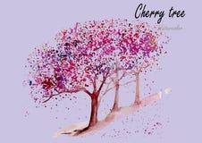 樱桃树 在白色背景的手拉的水彩绘画 库存照片