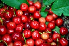 樱桃深度域新鲜的浅甜点 免版税库存照片