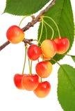 樱桃甜点 图库摄影