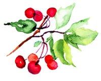 樱桃的水彩例证 库存图片