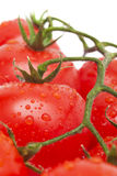 樱桃空白查出的蕃茄 免版税库存图片