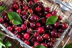 樱桃篮子 樱桃树分支 樱桃新鲜成熟 甜ch 免版税库存图片