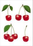 樱桃集合 第三个版本 简化 库存图片
