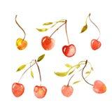 樱桃集合 向量例证