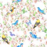 樱桃,苹果,花,鸟 水彩无缝的样式 免版税库存照片