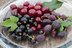 樱桃,鹅莓,黑醋栗 库存照片