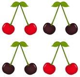 樱桃结果实叶子 皇族释放例证