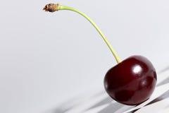 樱桃 免版税图库摄影