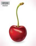 樱桃3d传染媒介 可实现轻快优雅的例证 库存照片