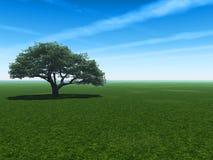 樱桃eco 库存图片