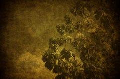 樱桃grunge结构树 免版税图库摄影
