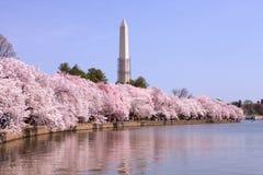 樱花华盛顿特区纪念碑 免版税库存照片
