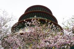 樱花和寺庙在cludy天空 免版税库存图片