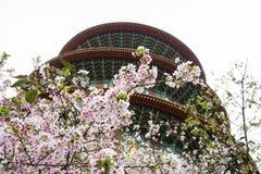 樱花和寺庙 免版税库存图片
